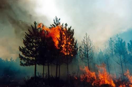 Problemática de incendios y prevención