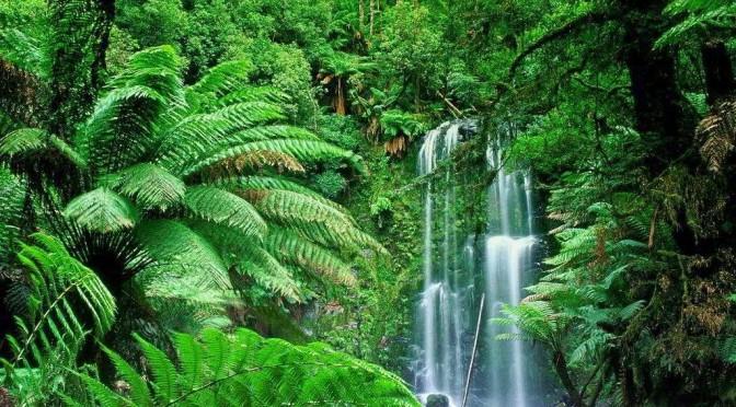 Bosques tropicales y lluviosos