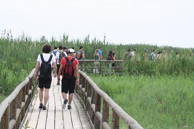 """Salida al Parque Natural """"El Hondo/El Fondo"""""""